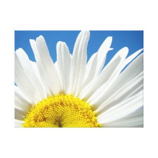Céu azul da flor da margarida branca de canvas de