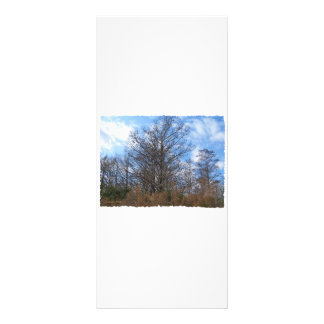 Céu azul do pântano da cena do inverno de Florida  10.16 X 22.86cm Panfleto