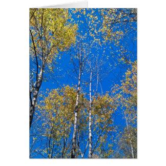 Céu azul e álamos cartão de nota