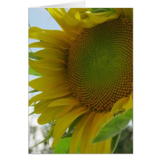 Céus azuis e cartão amigável do girassol da flor