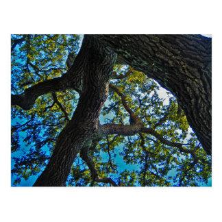 Céus o cartão da árvore do limite