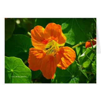 Chagas na laranja cartão