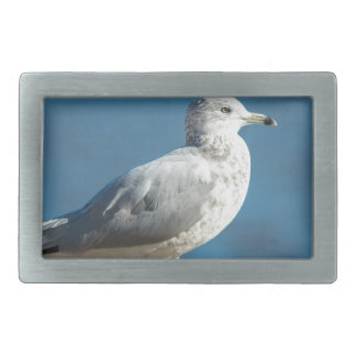 Chame-me M.Seagull