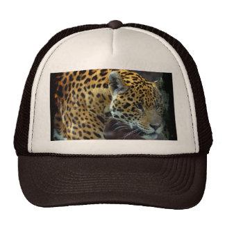 Chapéu asteca manchado do gato grande dos animais  bonés