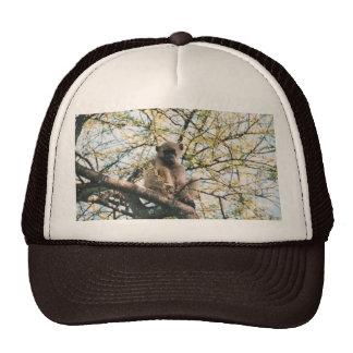 Chapéu com imagem do babuíno na árvore bones
