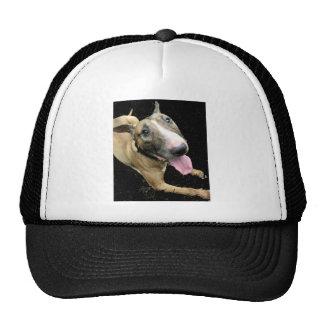 Chapéu de basebol do camionista de bull terrier do boné
