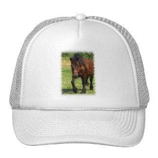 Chapéu de basebol do cavalo de esboço bones