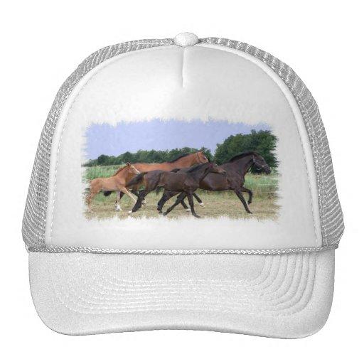 Chapéu de basebol dos cavalos selvagens bone