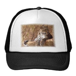 Chapéu de basebol observador do leopardo boné