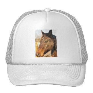 Chapéu de basebol sonolento do cavalo de esboço bonés