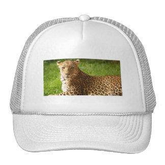 chapéu de TecBoy.net - leopardo Boné