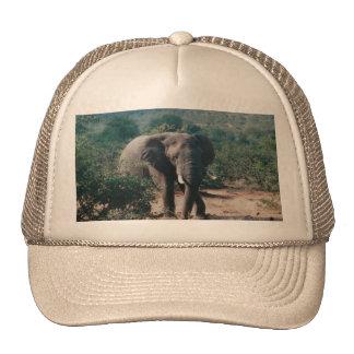 Chapéu do camionista com imagem do elefante bone
