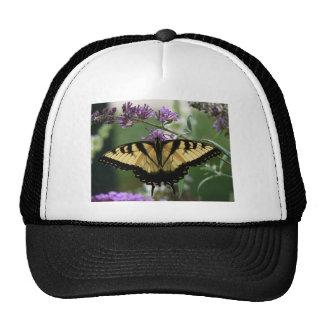 Chapéu do camionista da borboleta boné