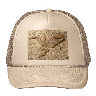 Chapéu do escorpião bonés