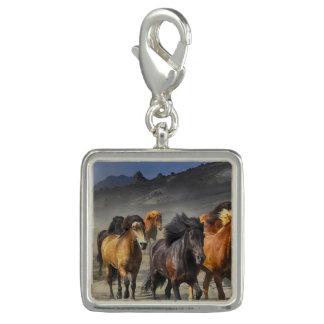 Charms Com Foto Cavalos selvagens