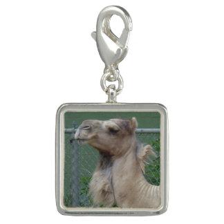 Charms Com Foto Encanto chapeado prata do camelo