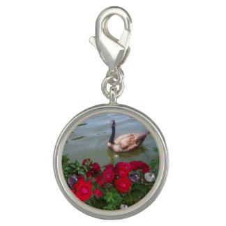 Charms Com Fotos Ganso em um encanto da lagoa do rosa