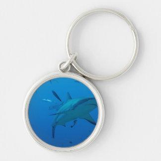 Chaveiro A casa da natação dos peixes do tubarão