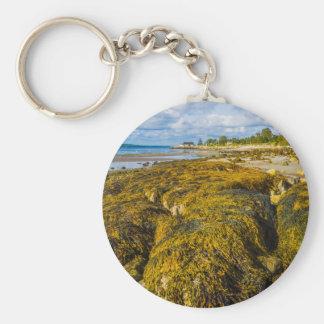 Chaveiro Alga da praia