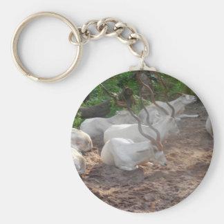Chaveiro Antílope branco