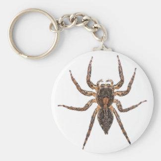 Chaveiro Aranha de salto Pantropical fêmea
