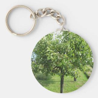 Chaveiro Árvore de pera com folhas do verde e frutas
