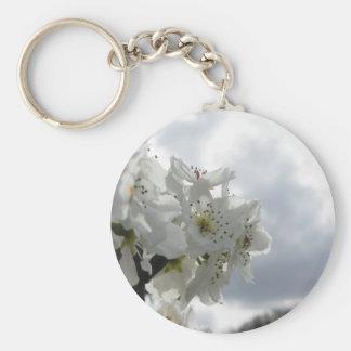 Chaveiro Árvore de pera de florescência contra o céu