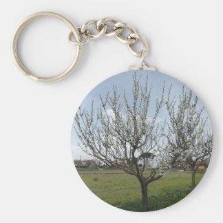Chaveiro Árvore de pera de florescência no jardim Toscânia,