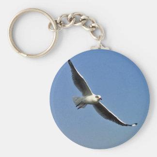 Chaveiro As gaivotas são pássaros bonitos