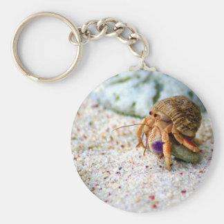 Chaveiro Caranguejo da areia, Curaçau, ilhas das Caraíbas,