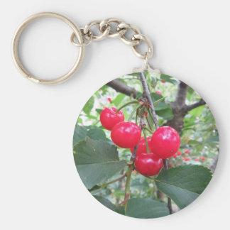 Chaveiro Cerejas vermelhas de Montmorency na árvore no