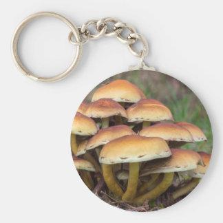 Chaveiro Cogumelos marrons do grupo na floresta da queda