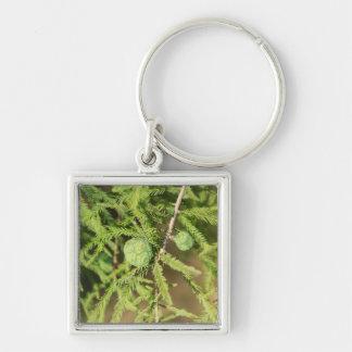 Chaveiro Cone da semente de Cypress calvo