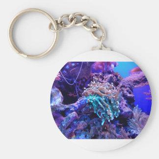Chaveiro coral-1053837