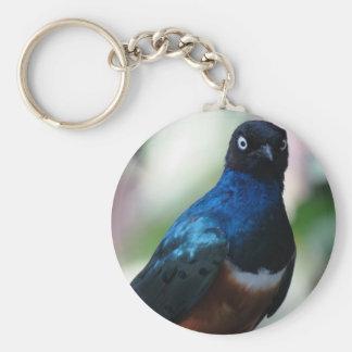 Chaveiro correntes chaves, bonitas, imagens, pássaros,