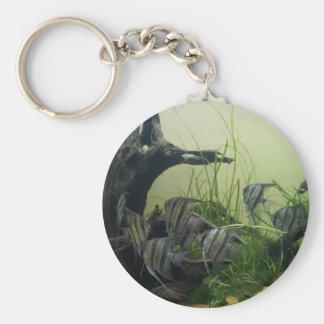 Chaveiro do botão do Angelfish de Orinoco