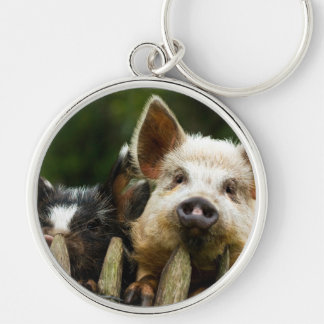 Chaveiro Dois porcos - fazenda de porco - fazendas da carne