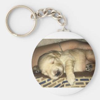 Chaveiro Filhote de cachorro do sono GoldenDoodle