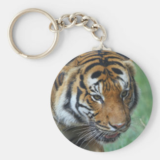 Chaveiro Fim-acima do tigre do Malay dos alugueres