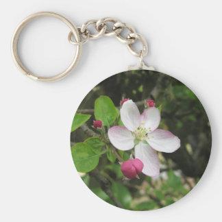 Chaveiro Flor cor-de-rosa da maçã no primavera. Toscânia,