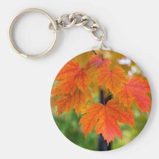 Chaveiro Folhas da árvore de bordo no close up da cor da