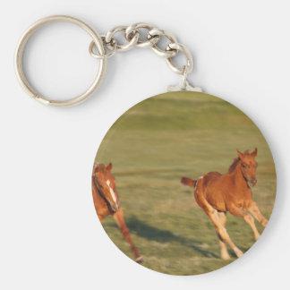 Chaveiro Funcionamento dos cavalos selvagem