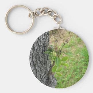 Chaveiro Galho da árvore de pera com os botões no primavera
