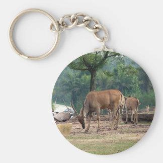 Chaveiro Gazela, jardim zoológico do animal selvagem, 羚.