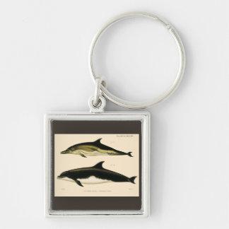 Chaveiro Golfinhos do vintage, animais marinhos e mamíferos