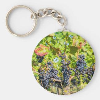 Chaveiro Grupos azuis de suspensão da uva no vinhedo