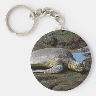 Chaveiro Honu que descansa nas rochas mornas