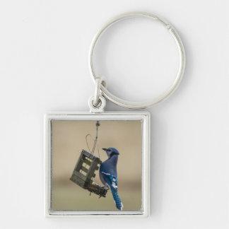 Chaveiro Jay azul de balanço