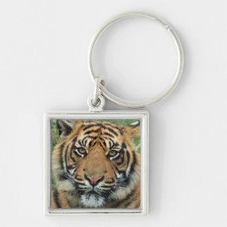 Chaveiro leva chave tigre