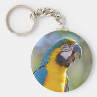 Chaveiro Macaw de Gelbbrustara na vara
